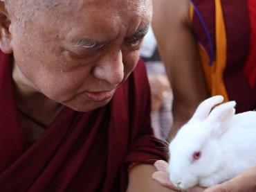 Liberar Animales del Miedo a la Muerte