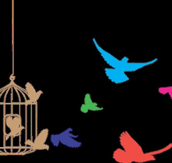 LIBERACIÓN DE ANIMALES